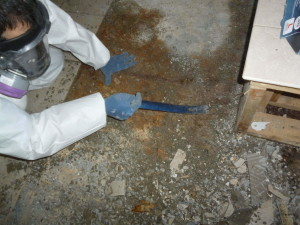 rsz_mold_removal_colorado_springs